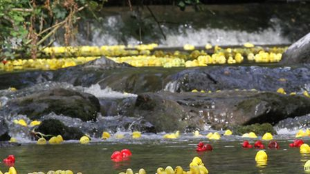 The ducks make their way down the river Sid on Sunday. Photo by Simon Horn. Ref shs 9886-30-14SH To