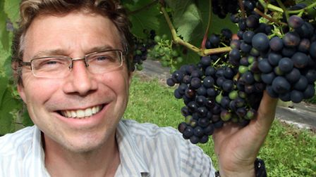 Andrew Simmons with some of his ripening grapes at his vineyard last year. Picture by Alex Walton. R