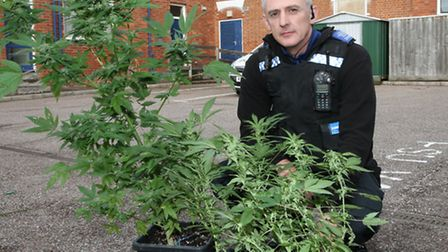 Sidmouth PCSO Steve Blanchford-Cox is pictured with cannabis plants that were discovered growing in