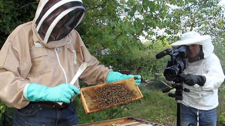 Beer bee Keeper. Ref shb 5969-39-14TI. Picture: Terry Ife