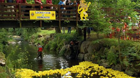 The Lions Club of Sidmouth held their annual duck race at The Byes. Ref shs 4138-30-15AW. Picture: A
