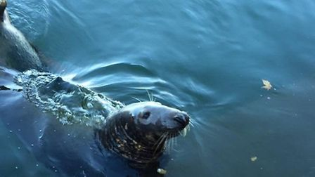The Baker family got up close and personal with a Seal on Sidmouth beach