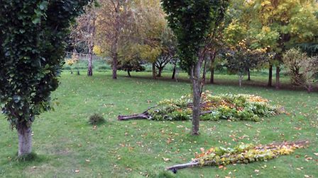 The two trees which were completely damaged in Margaret's Meadow over the weekend. Ref shs margarets