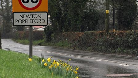 December daffodils in Newton Poppleford. Ref shs 8893-01-16TI. Picture: Terry Ife