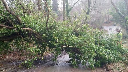 Gale force winds brought tree down in Toadpit Lane on Monday forcing police to close the road