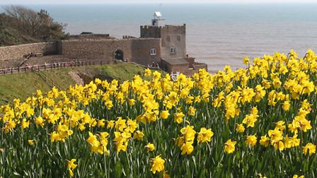 The stunning display of daffodils above Jacob's Ladder this week. Ref shs 11-16SH 7679. Picture: Sim