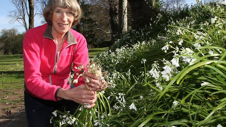 Sidmouth resident Lois Kelly with some of the invasive species of onion like plants growing en masse