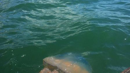 Guy Bennett spotted six barrel jellyfish while he was out fishing on Sunday.