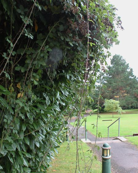 Ed Dolphin took these photos of 'neglect' at EDDC's Knowle HQ