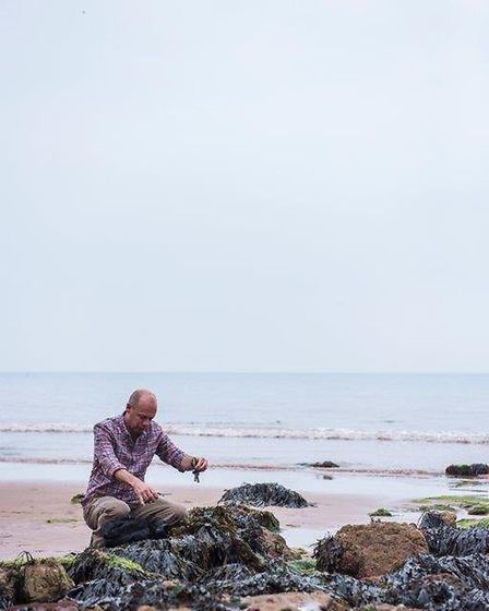 Tony Coulson collecting seaweed.