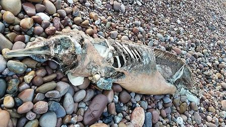 Michael Lane took a photo of the decomposed body of a dolphin that washed up near Chit Rocks on Wedn