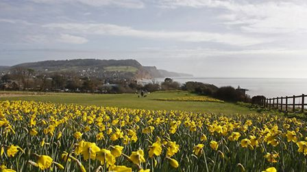 Sidmouth. Photo by Terry Ife. Ref shs 2455-10-14TI To order your copy of this photograph go to www.s