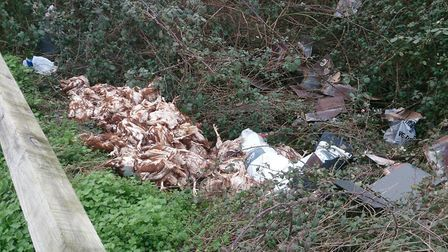 Between 40 and 50 dead hens were discovered dumped in a layby near Fairmile.