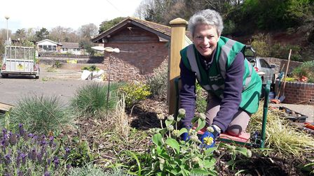 Lynette Talbot gets to work on one of the five beds Sidmouth in Bloom are replanting as part of its