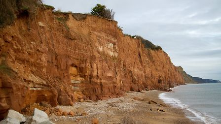Sidmouth cliffs. Ref shs 03-17TI 5498. Picture: Terry Ife