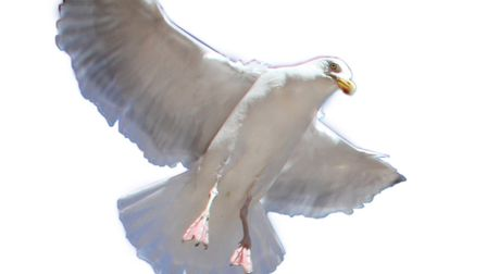 Seagull cut out