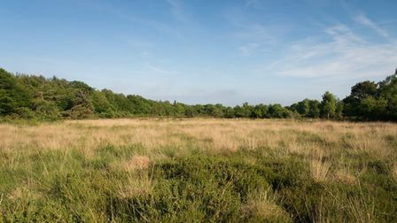 The heath looks empty at first glance. Picture: Alex Walton Photography