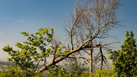 Young trees growing next to fallen ones are a common sight. Picture: Alex Walton Photography