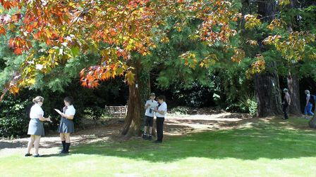 Pupils from Sidmouth Primary School enjoy a tree indentification exercise hosted by the town's arbor