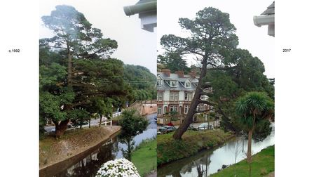 Barrington Mead resident Julian King photographed the Monterey pine in 1992 and 2017