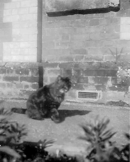 The Sidmouth Station cat