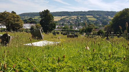 The lower section of Sidmouth Cemetery has been allowed to grow into a wildlife habitat