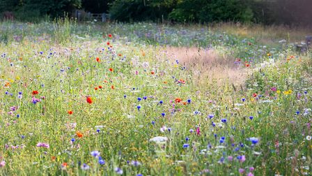The wild flower meadow resembles an artist's pallete.