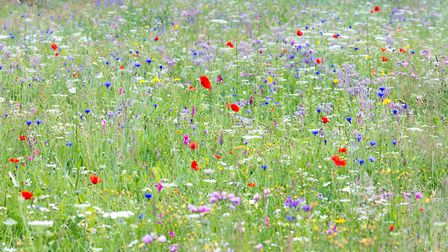 Wild flowers create a stunning display.