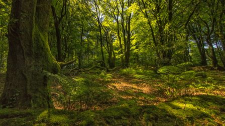 Walking the Core Hill footpath in June this year I noticed how the light was coming through the lush