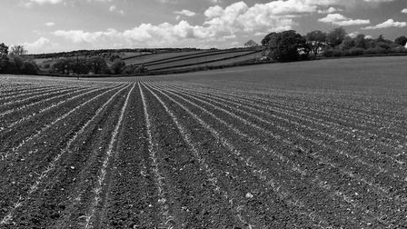 A footpath went right through this farmed field near Ottery, I love the lines in this shot. Taken Ma