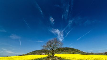I was over at Core Hill when I saw this rapeseed field in the distance, a quick walk over to Harcomb