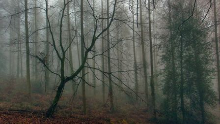 Taken in January of this year just by Sidmouth golf course on a very foggy day.