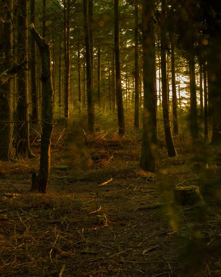 Taken on a warm April evening in 2015 of the woods up at Core Hill near Sidmouth.