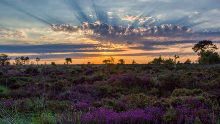 Glorious sunset over Mutters Moor with the heather in full bloom, taken in June 2015.