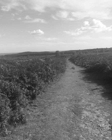 Track to nowhere. Picture: Sue Babb