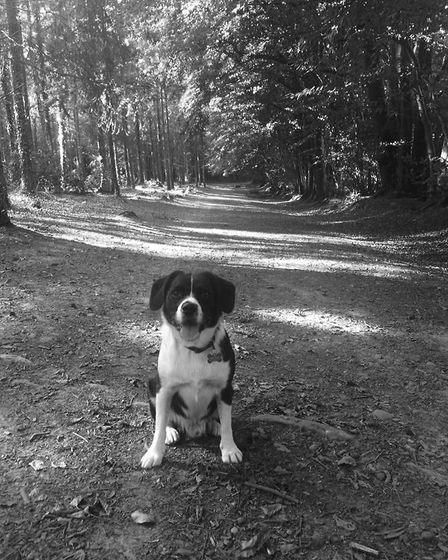 Walking in the woods. Picture: Sue Babb