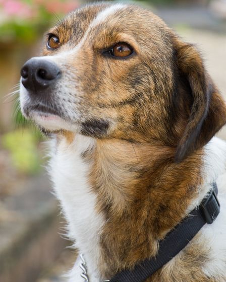 Sue Howes dog Cyrus. Ref shs 30-17TI 8300. Picture: Terry Ife