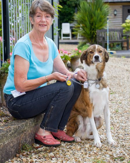 Sue Howes and her dog Cyrus. Ref shs 30-17TI 8285. Picture: Terry Ife