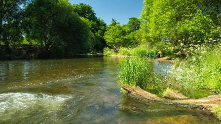 These were taken on the river walk from Otterton towards Newton Poppleford. Picture: Rob Hills