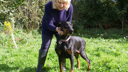Crystal Scott of ARC in Ottery with Darcy the Doberman. Ref sho 40 17TI 1828. Picture: Terry Ife