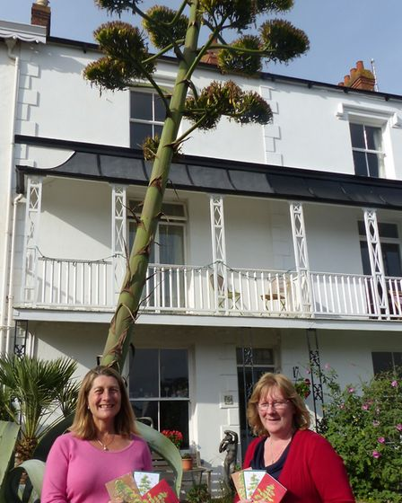 Artist Rebecca Lockyear with Sidmouth Print owner Tracey Millar by the blue agave plant in Salcombe