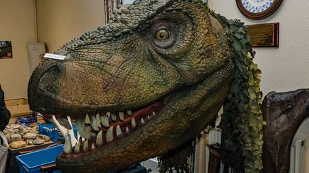 Henry the young T-Rex at Sidmouth Science Festival