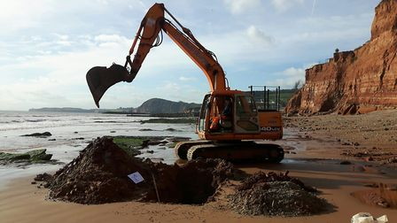 Diggers at work along Sidmouth beach and east beach.