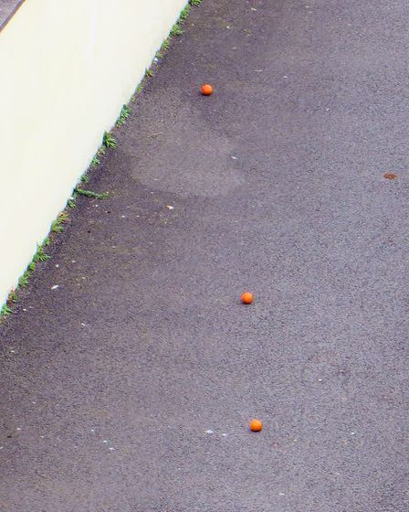 Three oranges mysteriously appeared on my driveway, 19th November 2017! Picture: Ian McLauchlin