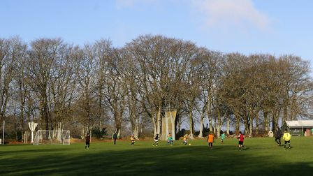 Football beneath mature beech trees Salcombe Regis. Picture: Diana East