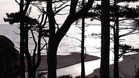 Through the Scots pines. Picture: Barbara Mellor