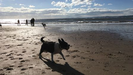 Dogs playing at Exmouth beach. Picture: Sue Babb