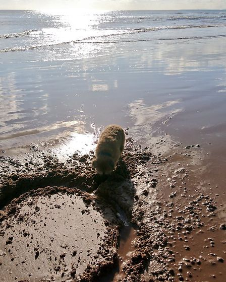 """Our border terrier Rufus loves playing on """"his"""" beaches at Sidmouth in the off peak season and reall"""