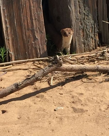 Unexpected lovely little visitor while laying in the sun at Dawlish Warren. Picture: Minnie Pappani