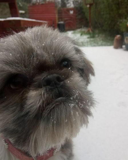 Bella questioning what snow is. Picture: Callum Tilley